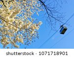 view of the beautiful cherry... | Shutterstock . vector #1071718901