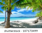 green tree on a white sand... | Shutterstock . vector #107173499