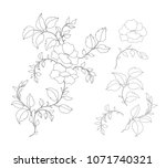 set of floral elements for... | Shutterstock .eps vector #1071740321