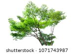isolated tree of thailand on... | Shutterstock . vector #1071743987