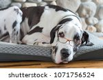 cozy dog sleeping by fireplace... | Shutterstock . vector #1071756524