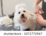 professional care for the dog... | Shutterstock . vector #1071772967