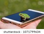 Small Frog On Smart Phone  ...