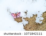 pink paper butterfly in winter... | Shutterstock . vector #1071842111
