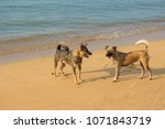 two dogs playing in the water... | Shutterstock . vector #1071843719