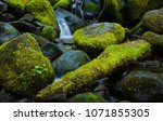 Three Moss Covered Rocks In A...
