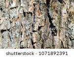 bark of tree. chopped firewood. ... | Shutterstock . vector #1071892391
