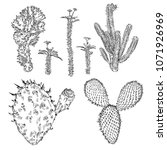 set of cactuses  hand drawn... | Shutterstock .eps vector #1071926969