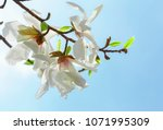 Small photo of Beautiful spring pink blossom of fruit tree. Flowering tree. Branch with the first flower against the blue sky