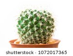 close up cactus isolated on... | Shutterstock . vector #1072017365