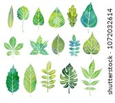 watercolor leaves of different... | Shutterstock . vector #1072032614