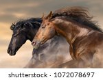 Stock photo two horse run free close up portrait 1072078697
