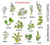 best medicinal herbs for hair... | Shutterstock .eps vector #1072112951