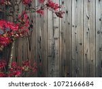 wooden background with... | Shutterstock . vector #1072166684