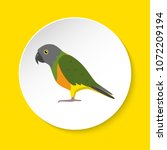 senegal parrot icon in flat... | Shutterstock .eps vector #1072209194