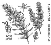 graphic rosemary set isolated... | Shutterstock .eps vector #1072243541