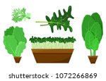 green salad leaves and roots... | Shutterstock .eps vector #1072266869