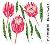 set of protea flowers. vector... | Shutterstock .eps vector #1072276235