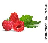 fresh  nutritious and tasty... | Shutterstock .eps vector #1072285031