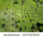 amazing drone view of trees in...   Shutterstock . vector #1072315529