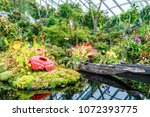 garden by the bay  singapore ... | Shutterstock . vector #1072393775
