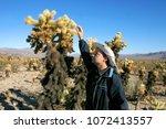 Cholla Cacti In The Ajo...