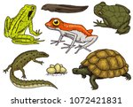 reptiles and amphibians set.... | Shutterstock .eps vector #1072421831
