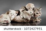 family group of four fluffy... | Shutterstock . vector #1072427951