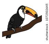 color beauty toucan bird animal ...   Shutterstock .eps vector #1072502645