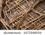 old tree roots covered walls.... | Shutterstock . vector #1072548554