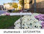 turin  italy   november 20 ... | Shutterstock . vector #1072549754