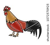 doodle rooster farm animal with ...   Shutterstock .eps vector #1072570925