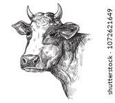 sketches of face cow drawn by...   Shutterstock .eps vector #1072621649