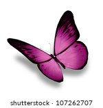 Stock photo violet butterfly isolated on white 107262707