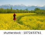 mustard field in pahalgam...   Shutterstock . vector #1072653761