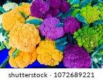 north america  united states ... | Shutterstock . vector #1072689221