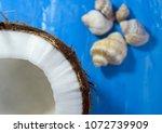 Coconut And Seashells  Rapana...