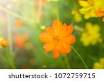 the background image of the... | Shutterstock . vector #1072759715