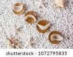 nourishing food bird nest   Shutterstock . vector #1072795835