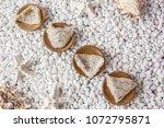 nourishing food bird nest   Shutterstock . vector #1072795871