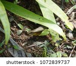close up of east indian brown... | Shutterstock . vector #1072839737