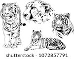 vector drawings sketches... | Shutterstock .eps vector #1072857791