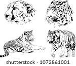 vector drawings sketches... | Shutterstock .eps vector #1072861001