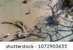 Aerial View Of Driftwood Beach...