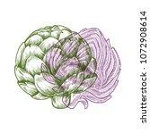 anaglyph artichoke illustration....   Shutterstock .eps vector #1072908614