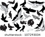 illustration with pigeon... | Shutterstock .eps vector #107293034