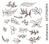 collection of  leaves | Shutterstock .eps vector #1072930394
