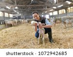 breeder woman feeding lamb with ... | Shutterstock . vector #1072942685