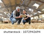 Sheep breeder with veterinary...