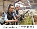 couple of breeders in barn... | Shutterstock . vector #1072942721